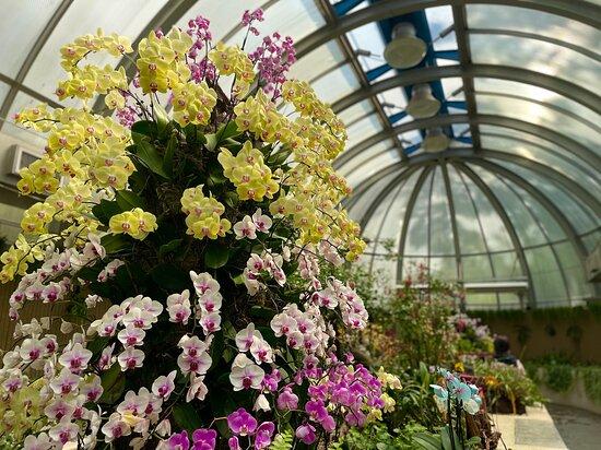 Green House - Botanical Gardens