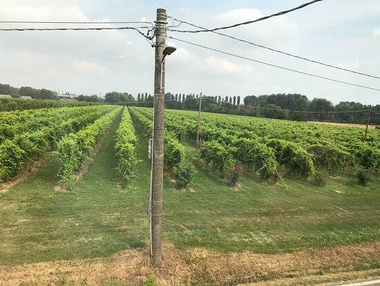 Fotografia de Modena