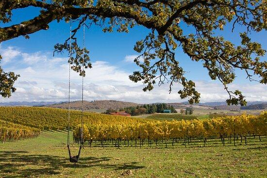 Andante Vineyard