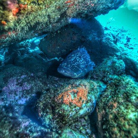 Mérou dans la réserve marine