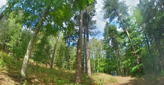 Woods in the Alpine Valley
