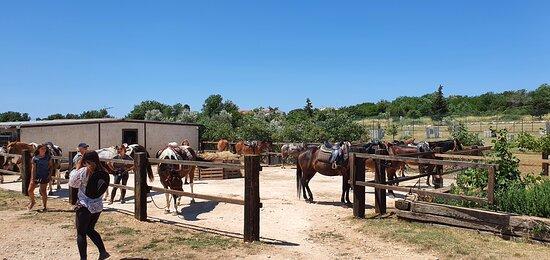 Samy's Ranch Šaraja 10952203 Medulin, Kroatien Reittouristik, Quad, Paintball   preisgünstig, nette Leute sprechen englisch, deutsch Anmeldung erforderlich.