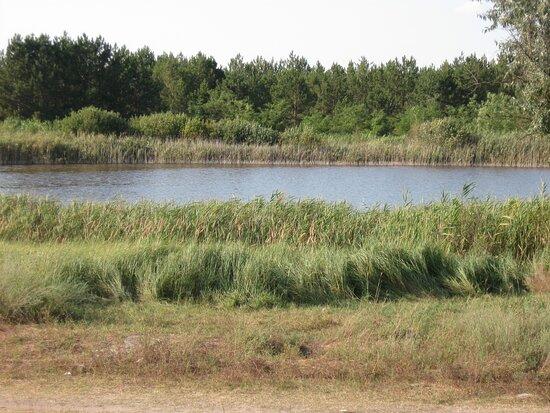 Prishhukovoye Iodistoye Lake