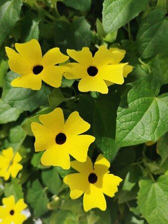 Flores amarillas en un jardín.