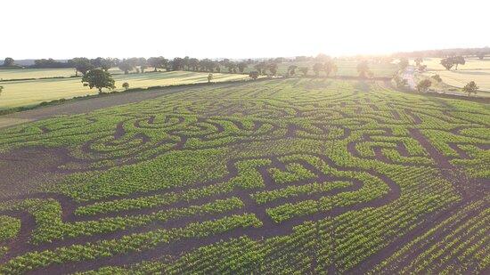 The Secret Garden Maize Maze