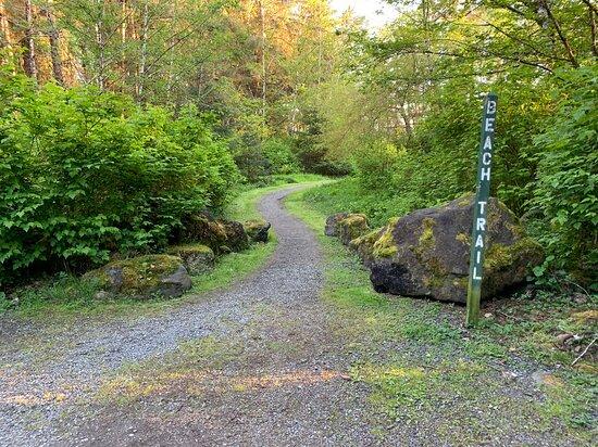 Beach access trail @ Haydn Turner Campground