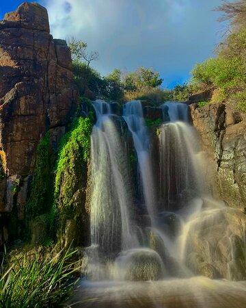 Water Fall Cape Naturalist