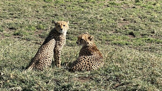 4-Day Private Tour Visiting Serengeti and Ngorongoro Wildlife and Culture tour 사진