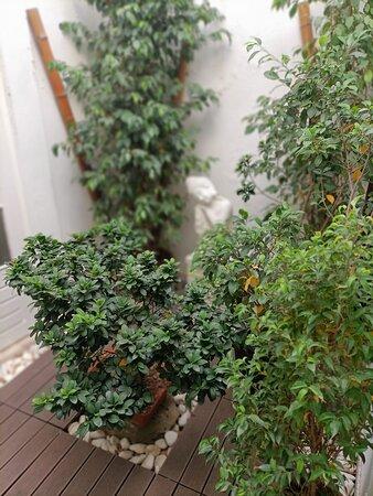 O nosso jardim verdinho, repleto de boa energia... #DaySpaMontijo Bom dia 🙏