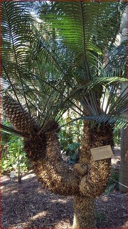 Sídney, Australia: Sydney's Botanic Garden. (Click on the photo to get the full picture).