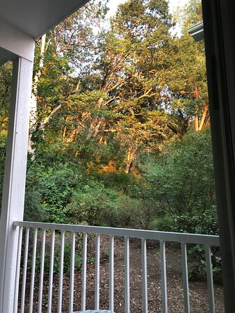 Back patio view, hillside suite