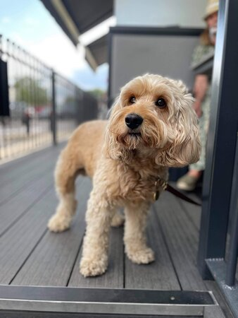 Terrace @ The Crown Hotel - Doggy Friendly!