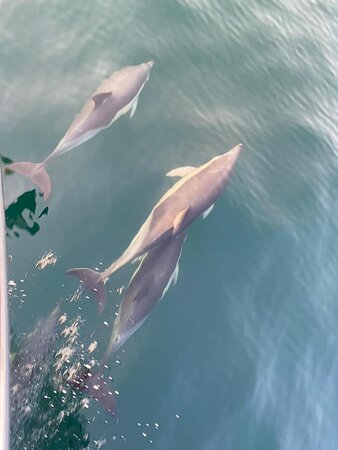 Dolphins followed us back into the harbour