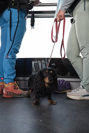 """Travelling with your little furry ones? Dont worry Romsdalen Gondola is dog friendly gondola ride. All you need to do is """"add on dog gondola ticket"""", then you are ready for the ride with your beloved dog."""