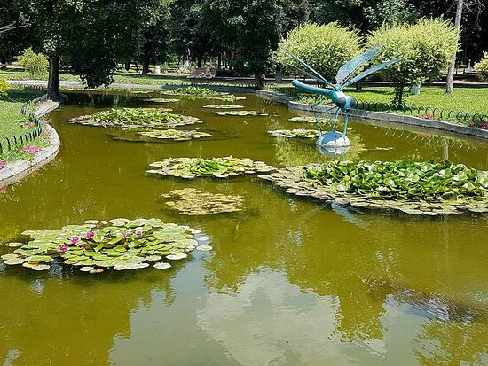 Yambol, Bulgarien: A pond with lilies in the town garden