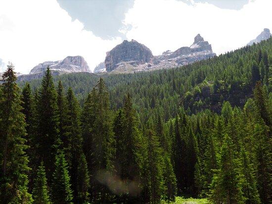 Panorama in direzione del rifugio Tuckett, preso dalla radura dove arriva la navetta da Campiglio e da dove partono vari sentieri, tra cui il sentiero per salire alla cascata Superiore o per scendere alla cascata di mezzo.