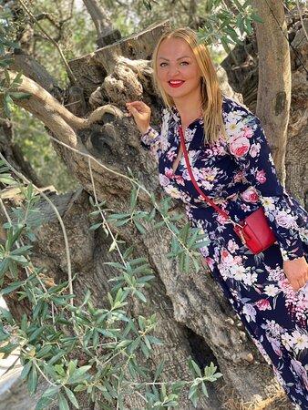 Оливковая ферма, 2021, 7000 оливковых деревьев. Потрясающее оливковое масло и изделия из оливковых деревьев! Вокруг горы, красота! Приятный хозяин. Лефкара, Кипр. На территории фермы растут оливы по 400 и даже 800 (!) лет.