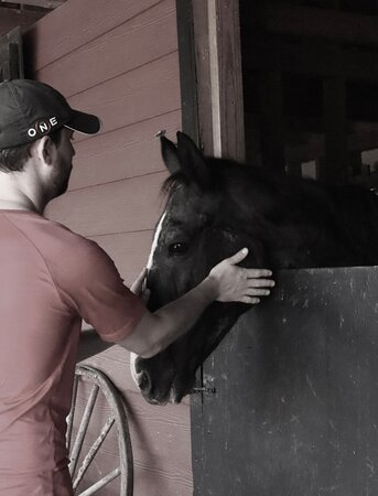 Senior horse rescue bonding with a visitor