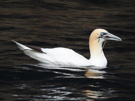 לרוויק, UK: Seabirds and Seals trip to Noss, Sunday 11th July 2021.