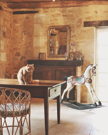 Lily le chat de la maison