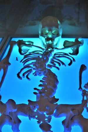 17.  King Richard III Visitor Centre, St Martins, Leicester