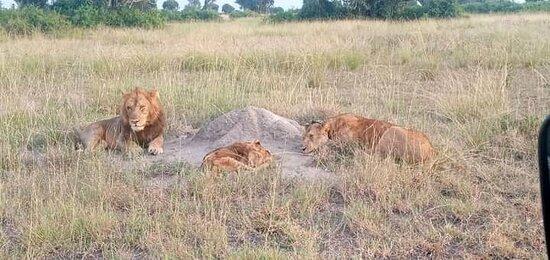 5天4夜野生動物遊卡津加通道-伊麗莎白女王國家公園照片