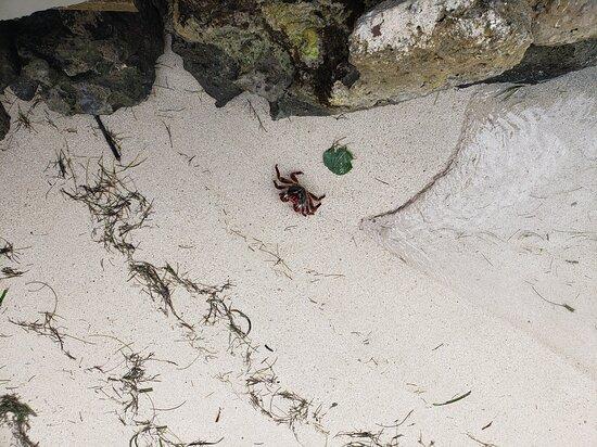 Cangrejos se ven de diferentes tamaños