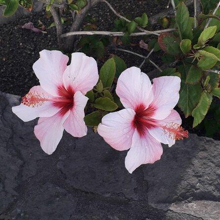 Playa De Los Cancajos, Espagne : Los Cancajos Blooms