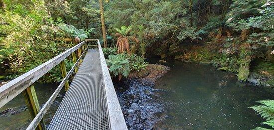 Julius River Rainforest Walk