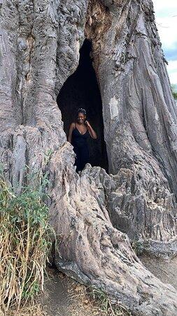 Dans un baobab, Terangire