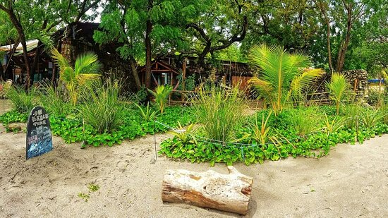 Our surf camp in Nicaragua is nestled right on the beach!