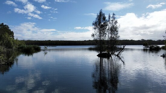 Cruise 'n' Canoe to Australia's Everglades: Entering calm waters of the Everglades 