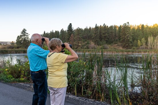 There are over 320 species of birds that make the Okanagan their home. Many of these are found in and around Vernon. Bluebirds, swallows, sparrows, towhees, kingbirds, orioles, bullocks, quail, flycatchers, grosbeaks, blackbirds, catbirds, warblers, partridges, thrush, hawks, eagles, ducks, swans, and gulls are just a few of the species you will find here.