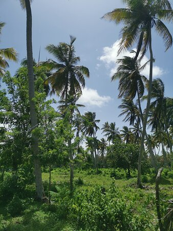 Cộng hòa Dominica: The best experiencie in Dominican Republic! Playas vírgenes, paseo a caballo con paisajes paradisíacos.