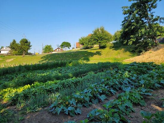 Dworski ogród
