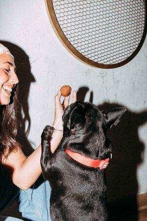 Pet-friendly, amamos la comida y a nuestros compañeros mas fieles,