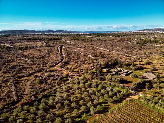 Our vineyard and olive groove next to basilica from 6th. century.