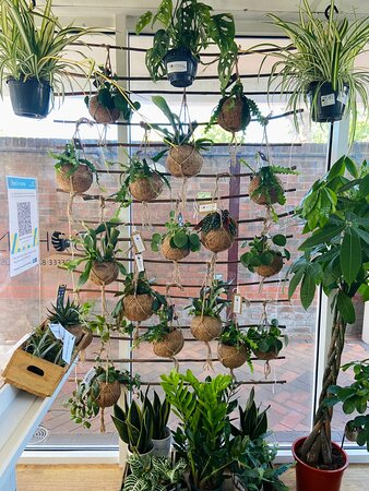 A sneak peak at some of the plants we have available in the shop!