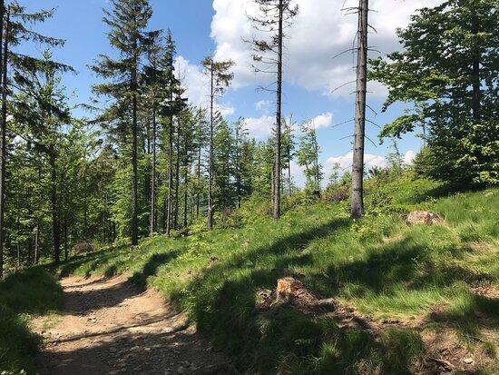 Czarny szlak na Grabową