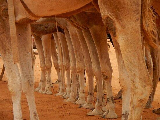 شنقيط, موريتانيا: Chinguetti 29