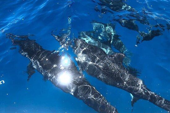 Kohala Coast Whale and Dolphin Tour Aboard Black Pearl