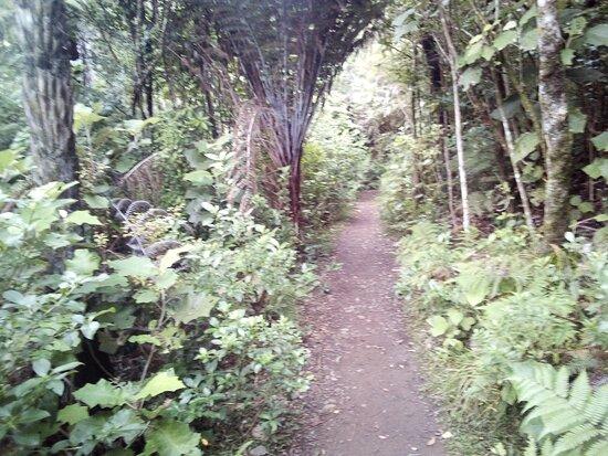 The Trig Walk