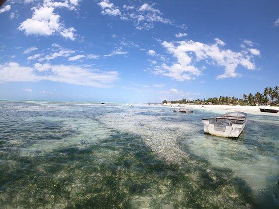 Aquatic Diving Zanzibar