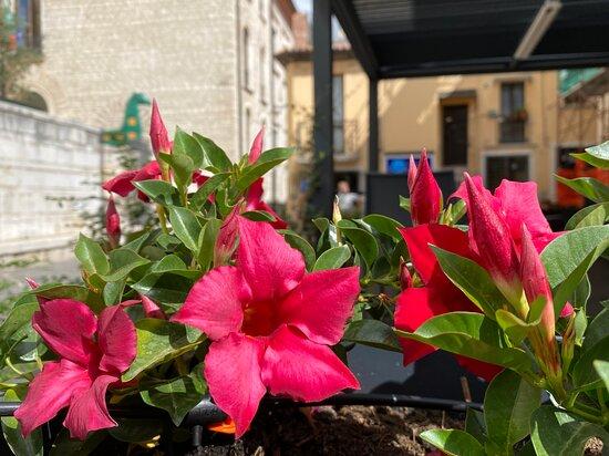 I fiore del ristorante Al duomo