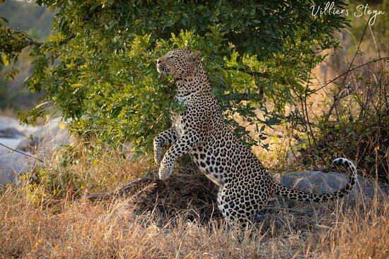 Mala Mala Private Game Reserve Foto
