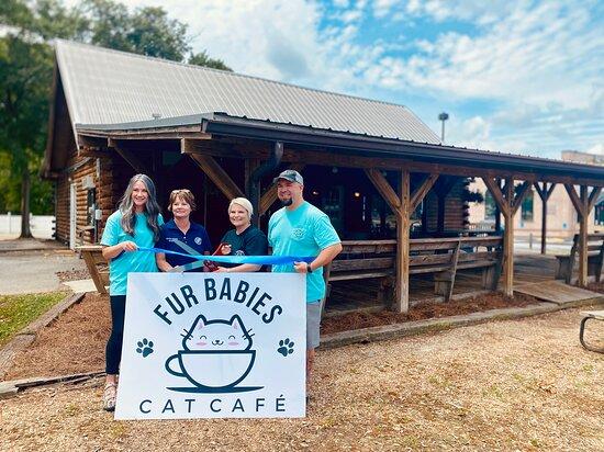 Fur Babies Cat Cafe