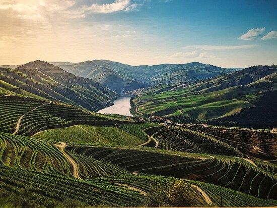 WOW - World of Wine
