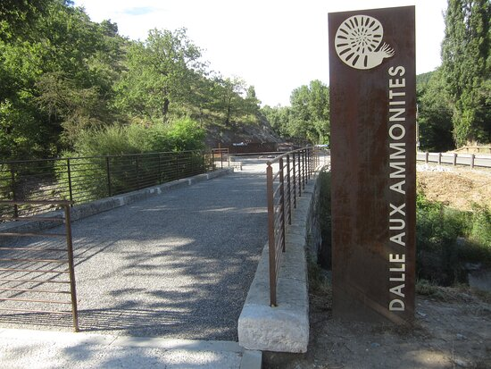 La dalle aux ammonites