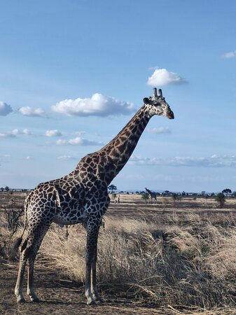 Private Full-Day Trip to Mikumi National Park from Dar es Salaam Resmi