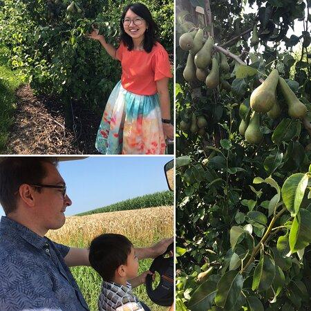 Incredible experience at this B&B and fruitfarm